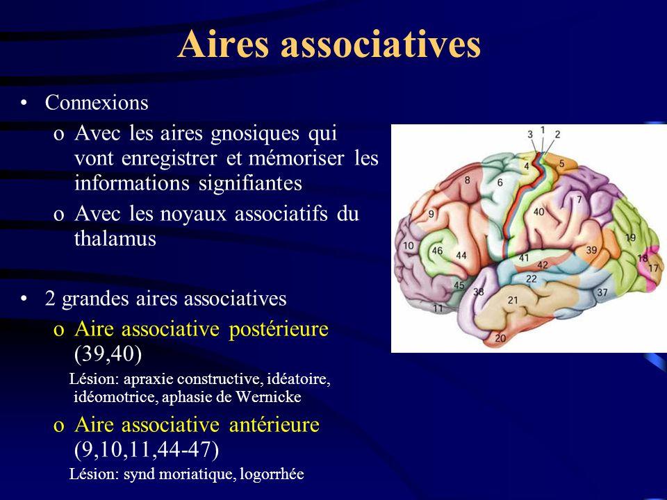Aires associatives Connexions. Avec les aires gnosiques qui vont enregistrer et mémoriser les informations signifiantes.