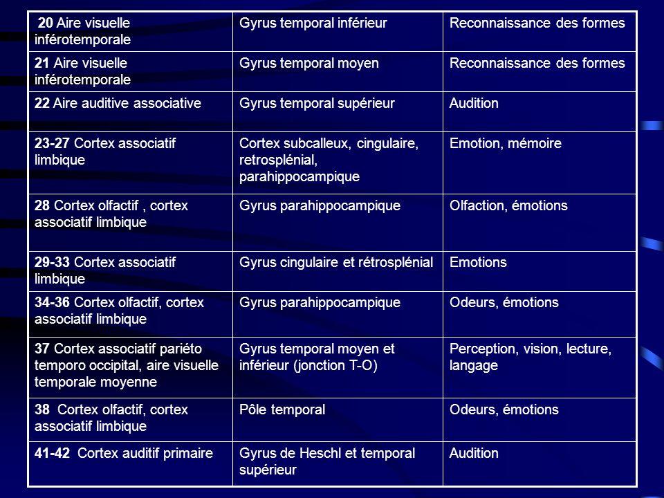 Odeurs, émotions Pôle temporal. 38 Cortex olfactif, cortex associatif limbique. Gyrus parahippocampique.