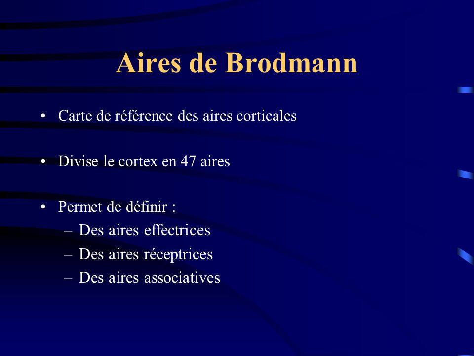 Aires de Brodmann Des aires effectrices Des aires réceptrices