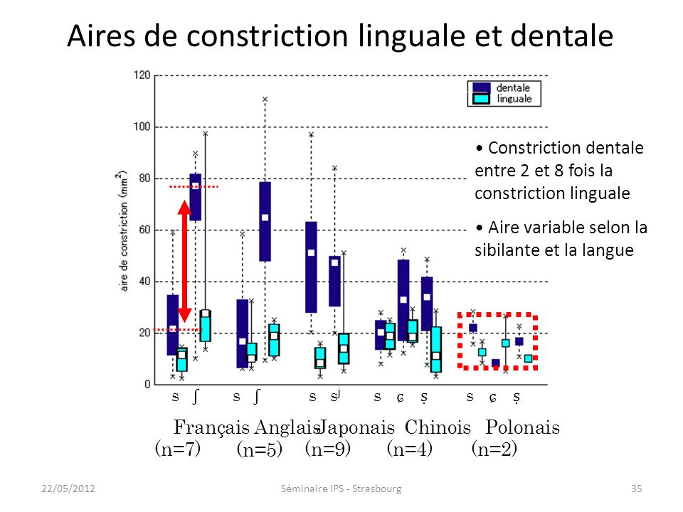 Aires de constriction linguale et dentale