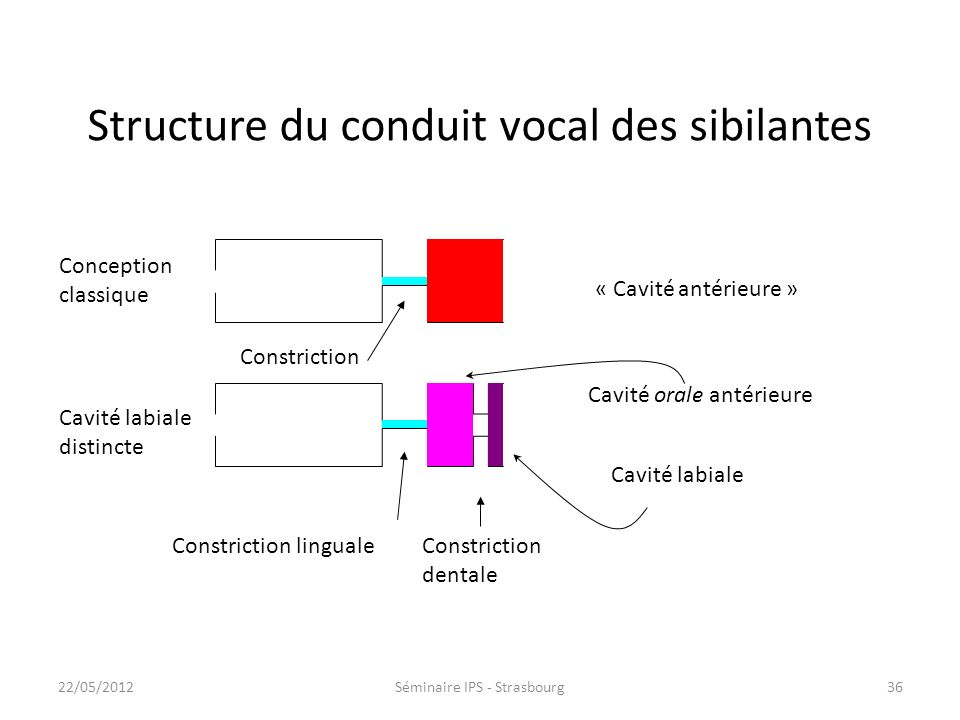 Structure du conduit vocal des sibilantes