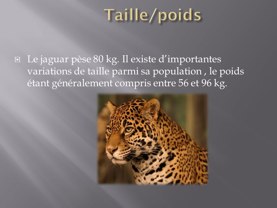 Taille/poids