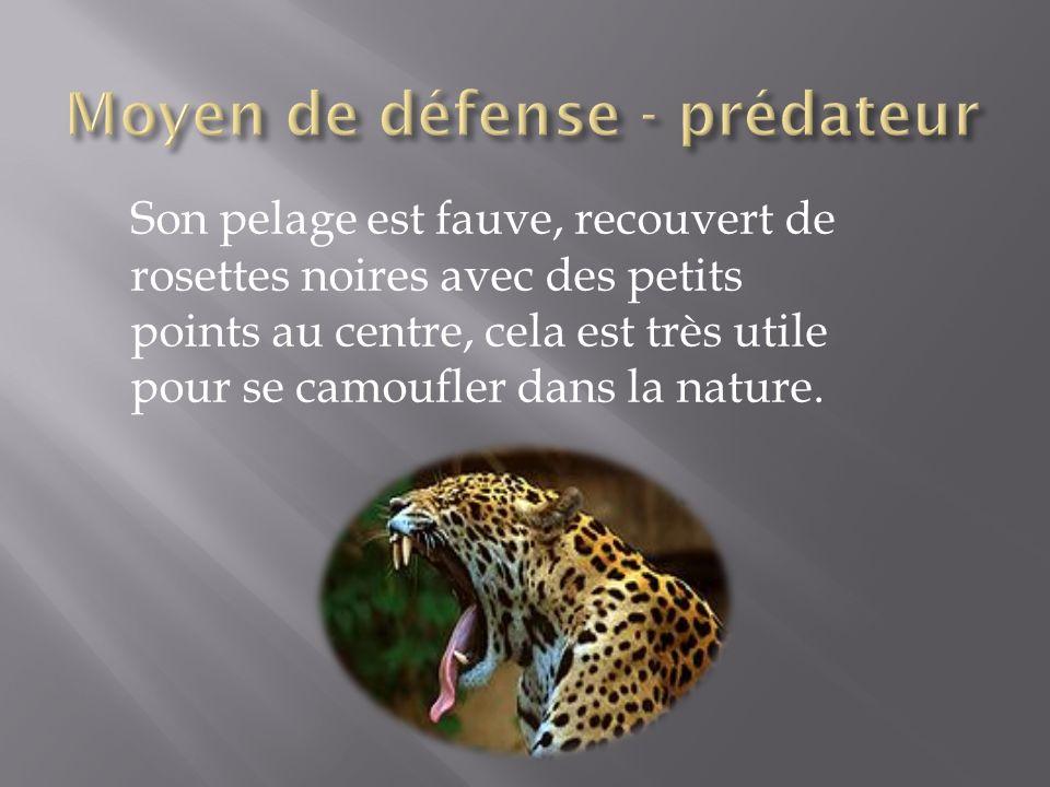 Moyen de défense - prédateur