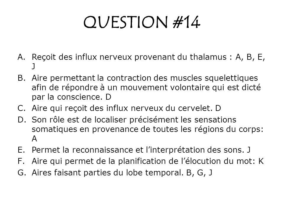 QUESTION #14 Reçoit des influx nerveux provenant du thalamus : A, B, E, J.