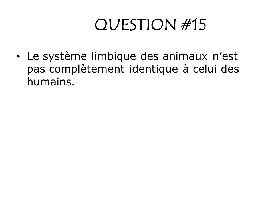 QUESTION #15 Le système limbique des animaux n'est pas complètement identique à celui des humains.
