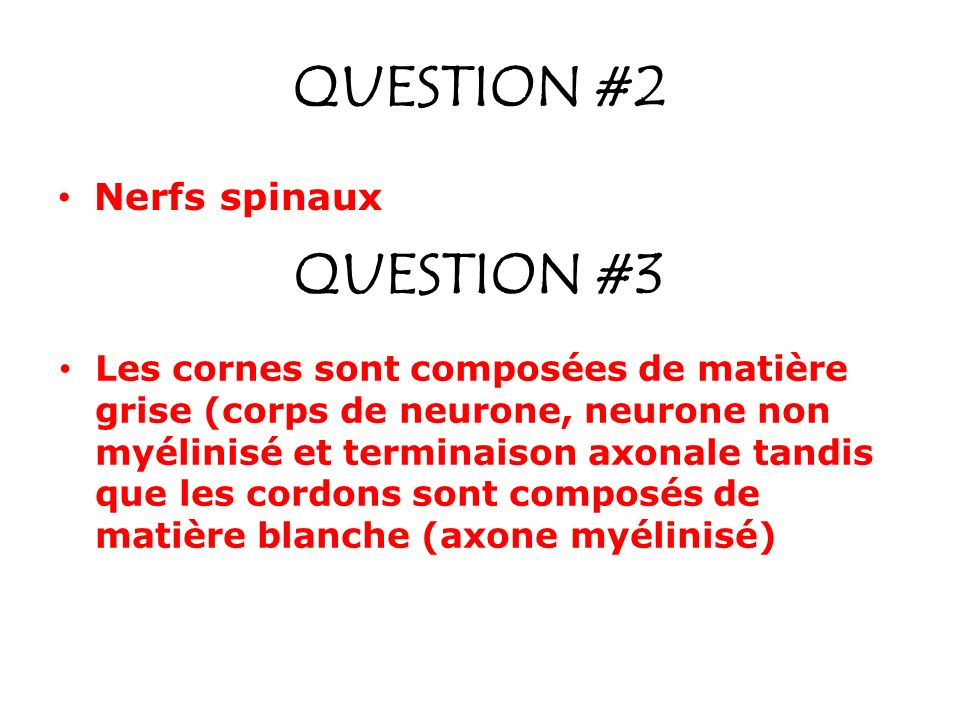 QUESTION #2 QUESTION #3 Nerfs spinaux
