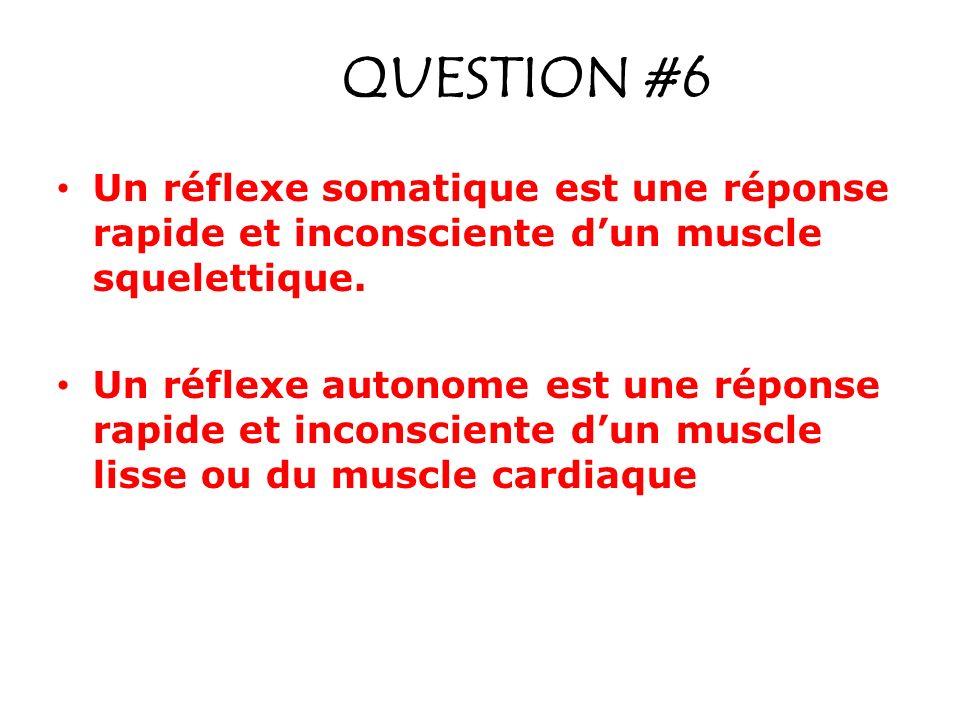 QUESTION #6 Un réflexe somatique est une réponse rapide et inconsciente d'un muscle squelettique.