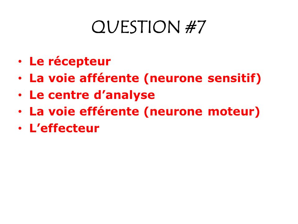 QUESTION #7 Le récepteur La voie afférente (neurone sensitif)