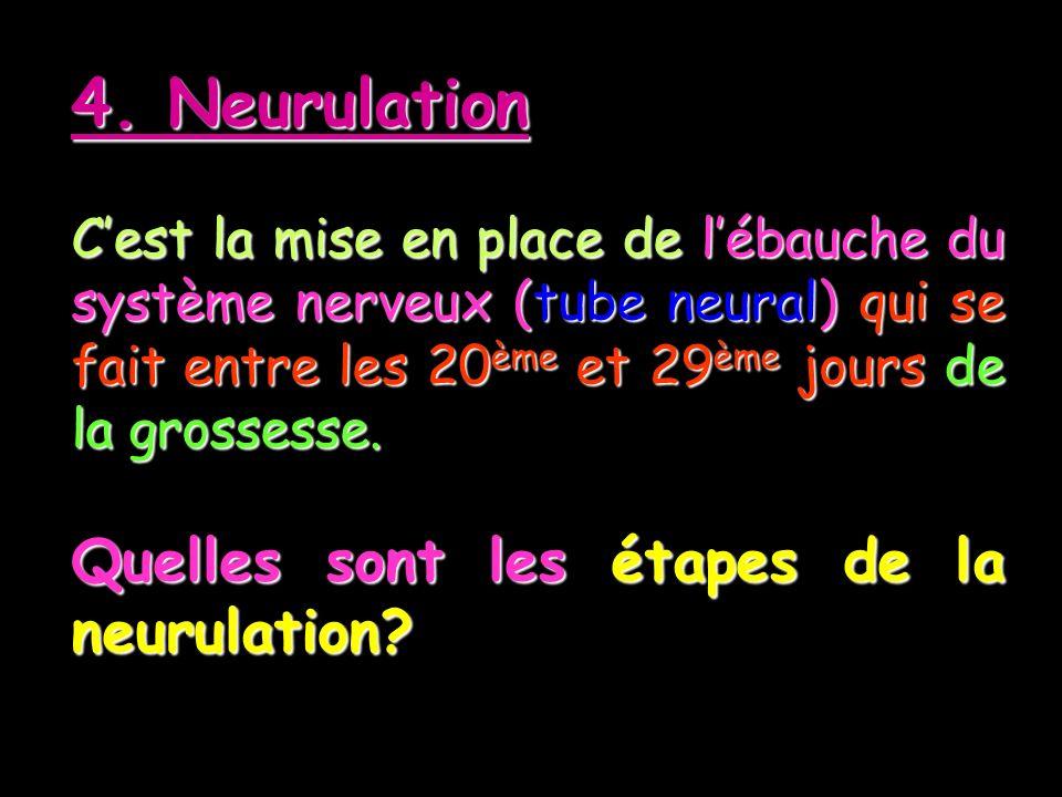4. Neurulation Quelles sont les étapes de la neurulation