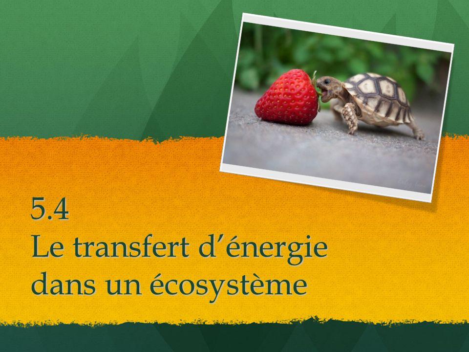 5.4 Le transfert d'énergie dans un écosystème
