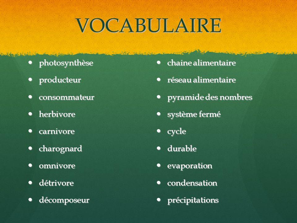 VOCABULAIRE photosynthèse producteur consommateur herbivore carnivore