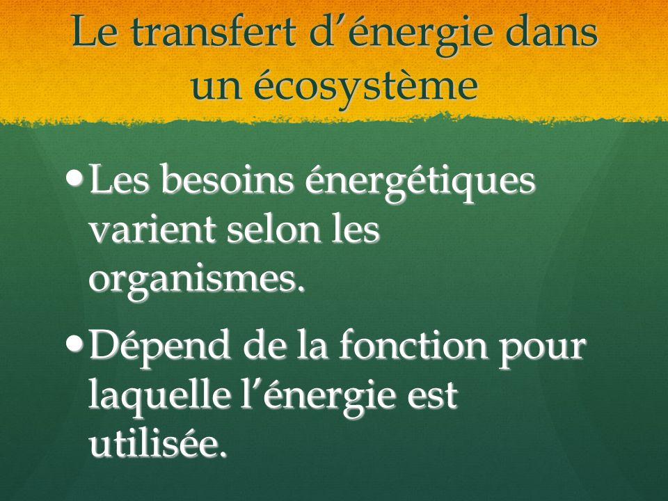 Le transfert d'énergie dans un écosystème