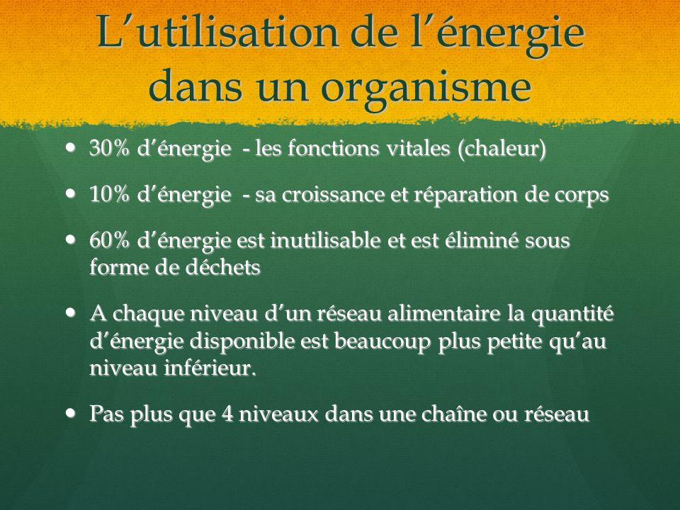 L'utilisation de l'énergie dans un organisme