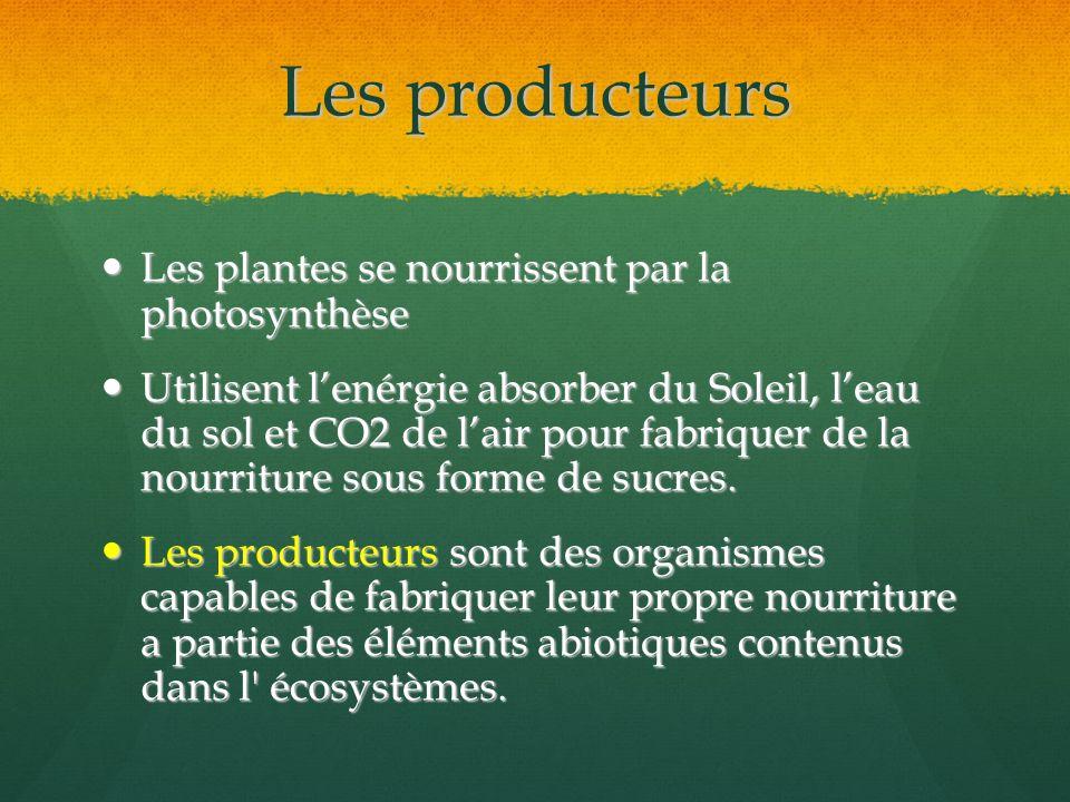 Les producteurs Les plantes se nourrissent par la photosynthèse