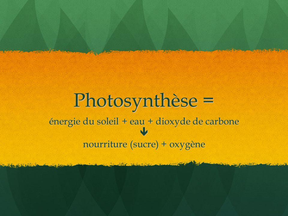 Photosynthèse = énergie du soleil + eau + dioxyde de carbone 