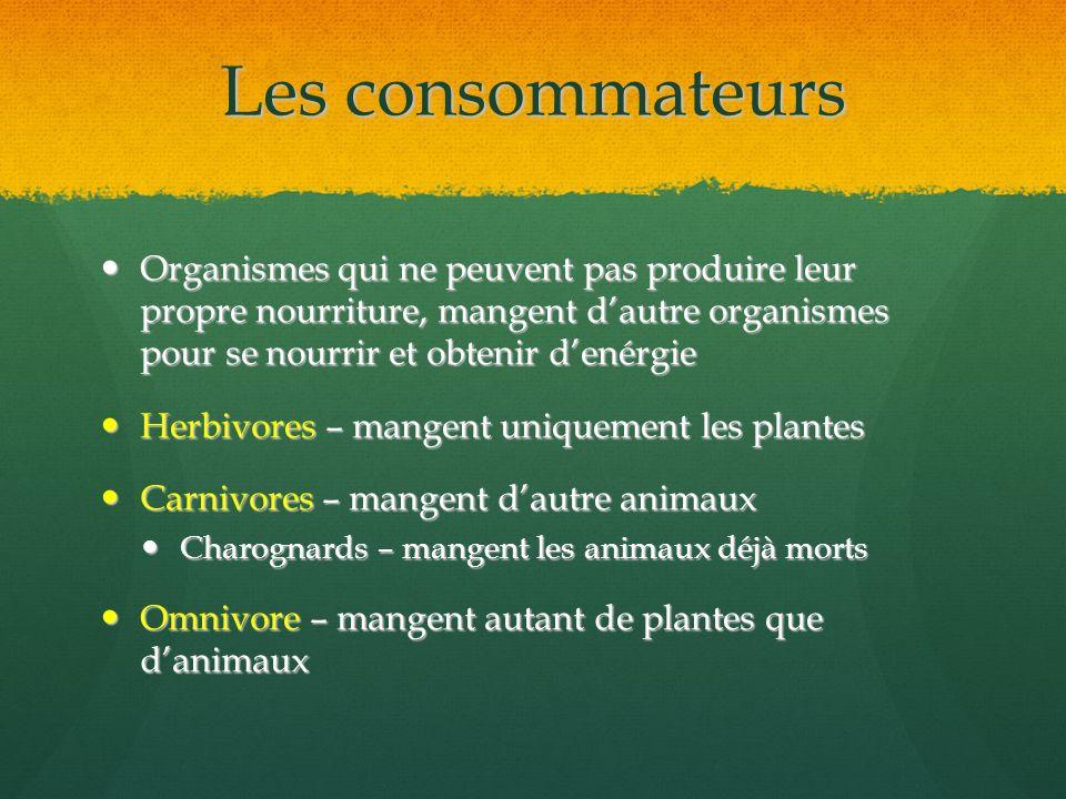 Les consommateurs Organismes qui ne peuvent pas produire leur propre nourriture, mangent d'autre organismes pour se nourrir et obtenir d'enérgie.