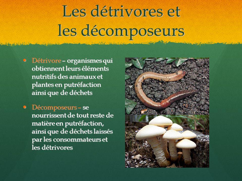 Les détrivores et les décomposeurs