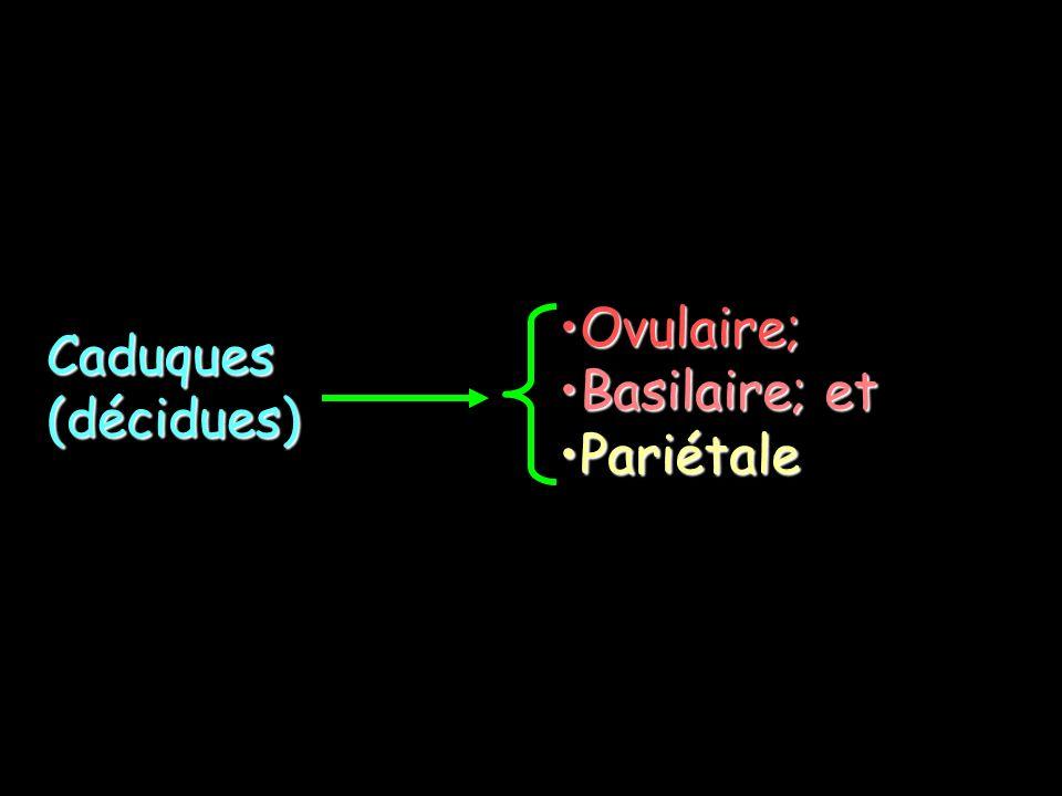 Ovulaire; Basilaire; et Pariétale Caduques (décidues)