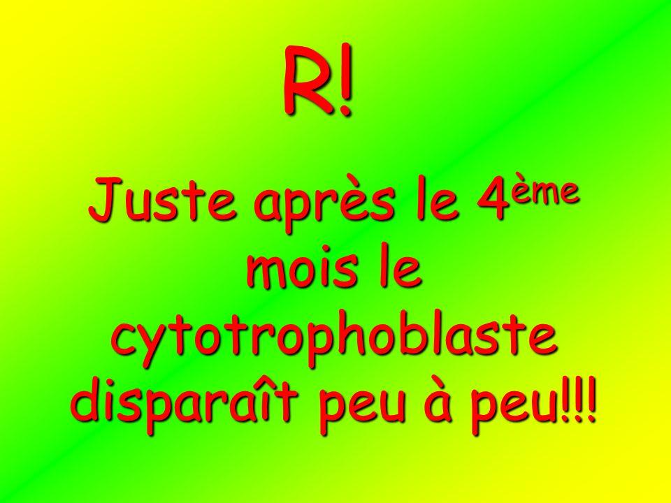 Juste après le 4ème mois le cytotrophoblaste disparaît peu à peu!!!