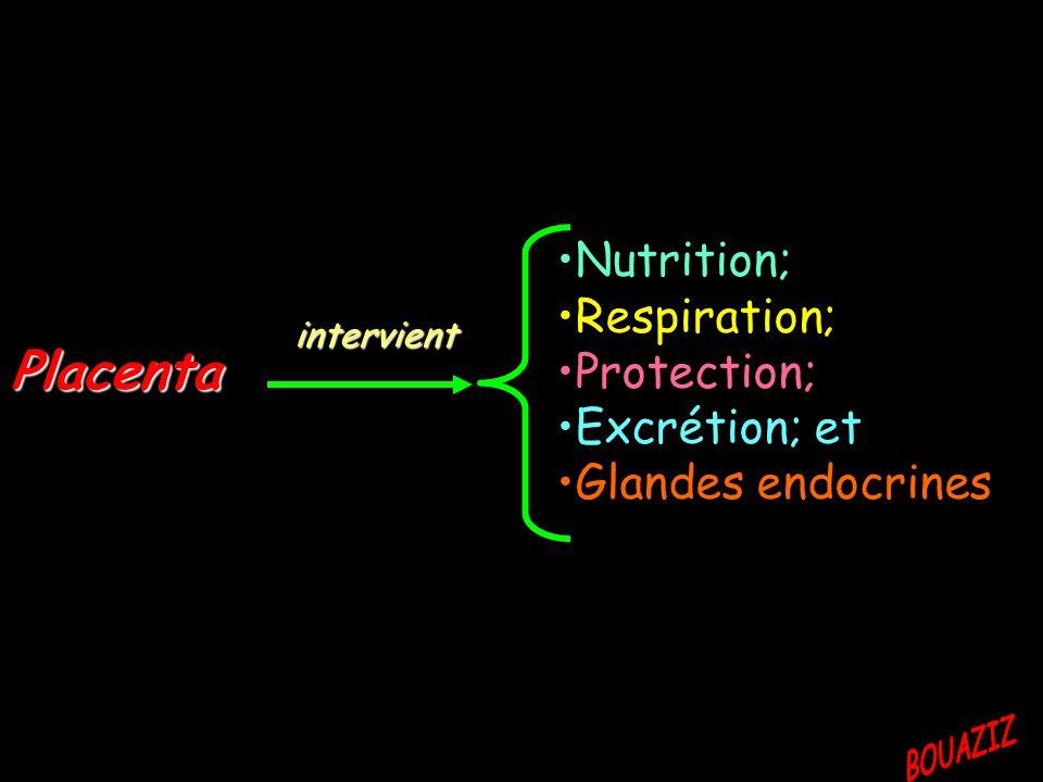 Placenta Nutrition; Respiration; Protection; Excrétion; et