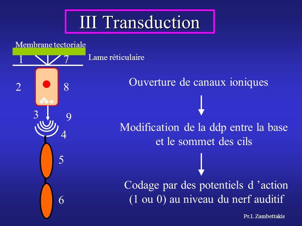 III Transduction 1 7 Ouverture de canaux ioniques 2 8 3 9