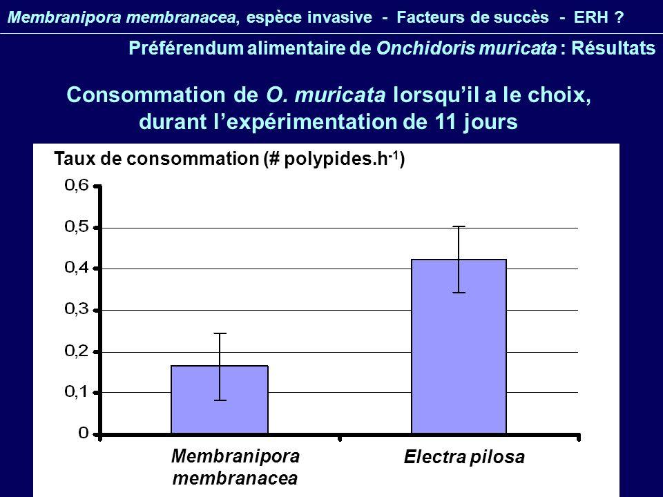 Membranipora membranacea, espèce invasive - Facteurs de succès - ERH