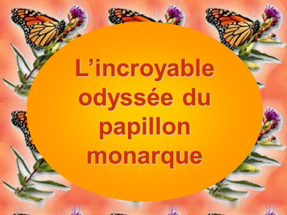 L'incroyable odyssée du papillon monarque