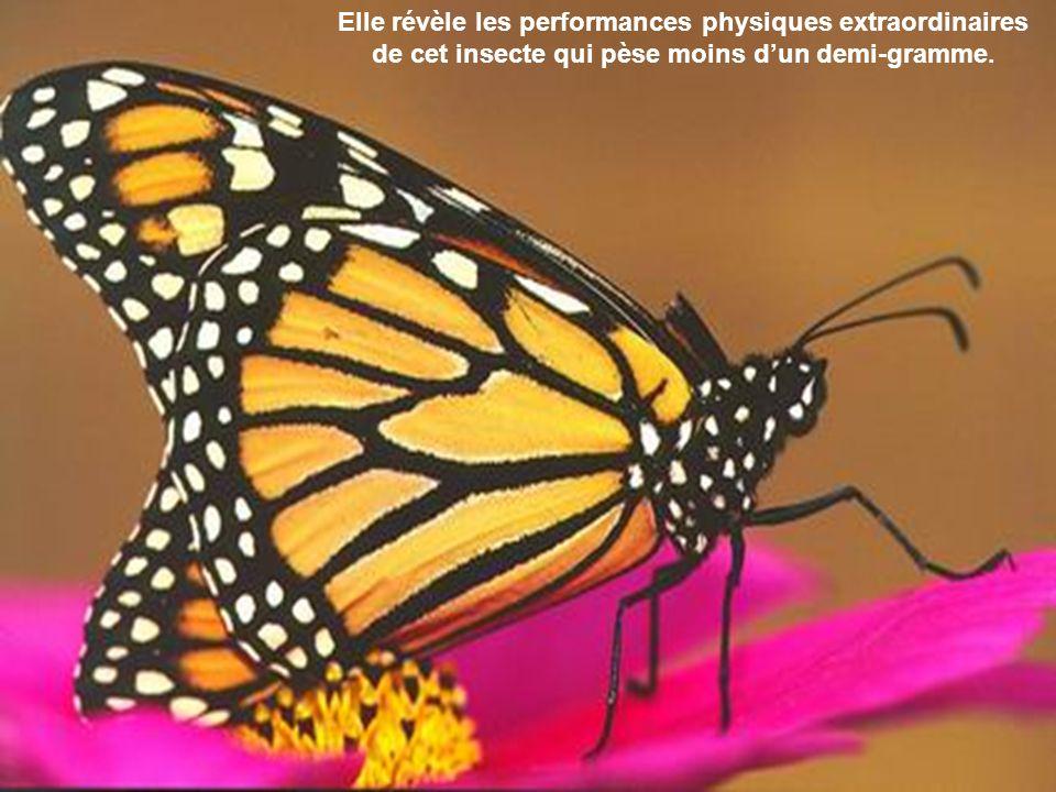 Elle révèle les performances physiques extraordinaires de cet insecte qui pèse moins d'un demi-gramme.