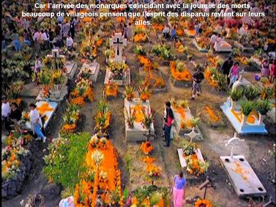 Car l'arrivée des monarques coïncidant avec la journée des morts, beaucoup de villageois pensent que l'esprit des disparus revient sur leurs ailes.