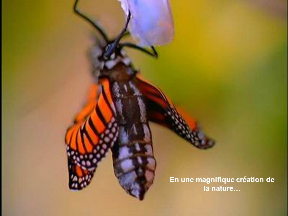 En une magnifique création de la nature…
