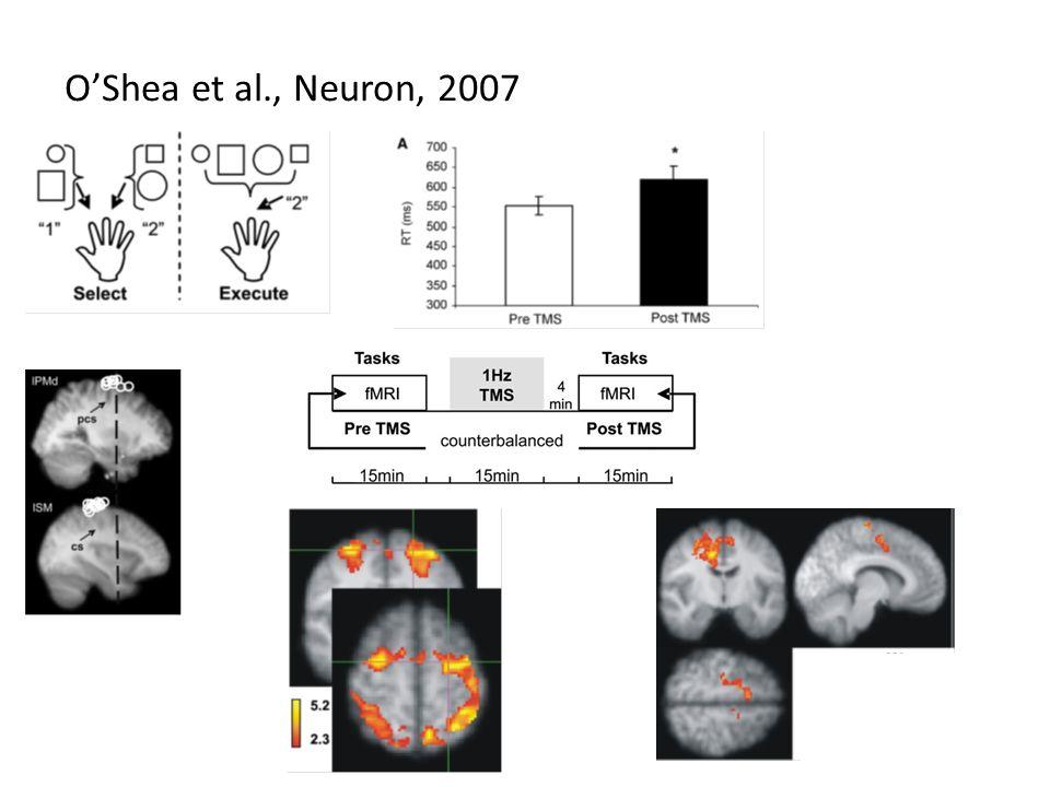O'Shea et al., Neuron, 2007