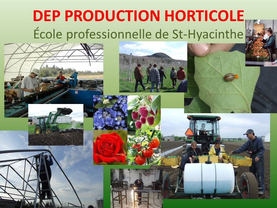 DEP PRODUCTION HORTICOLE École professionnelle de St-Hyacinthe