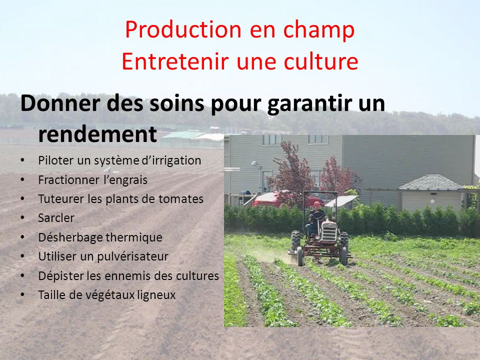 Production en champ Entretenir une culture