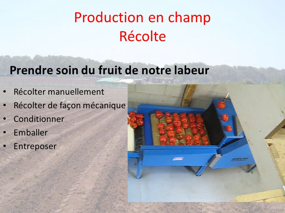 Production en champ Récolte