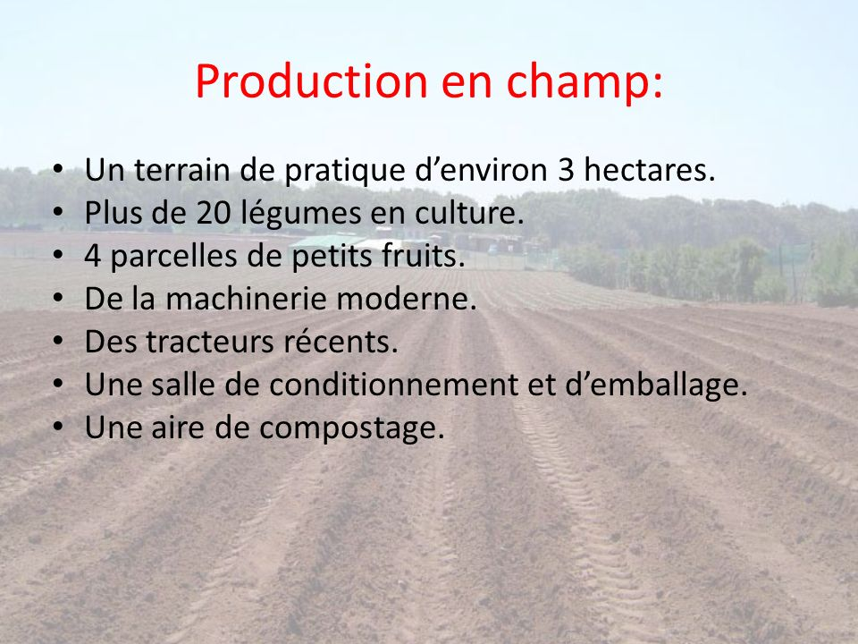 Production en champ: Un terrain de pratique d'environ 3 hectares.