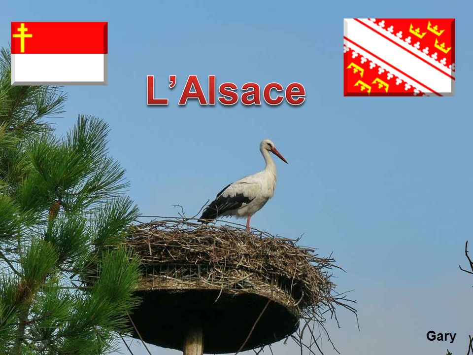 L'Alsace Gary