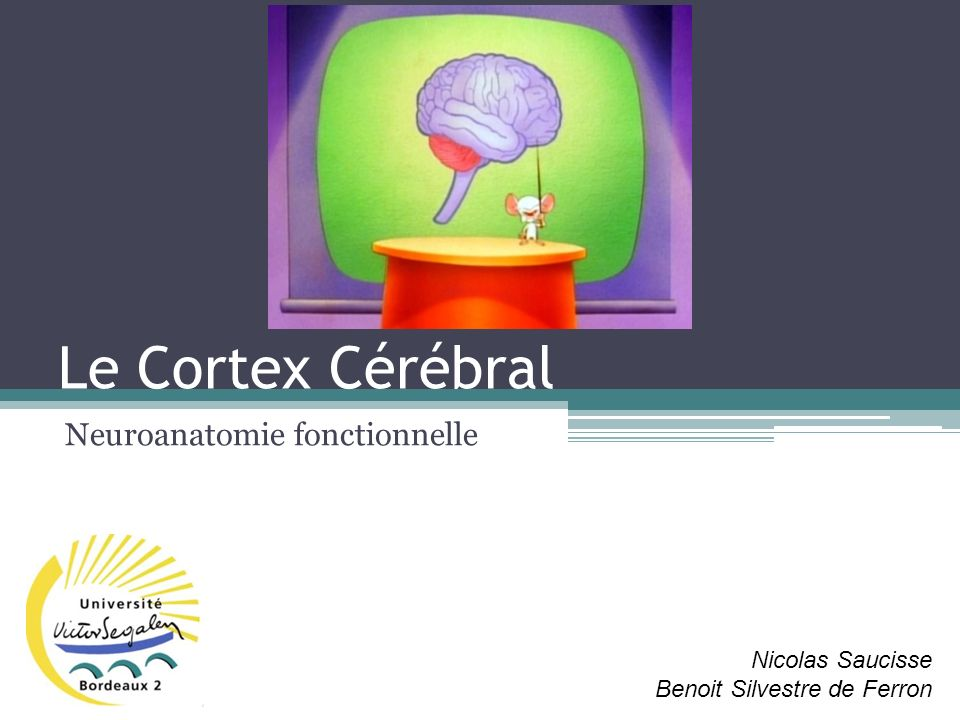 Neuroanatomie fonctionnelle