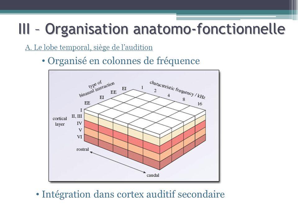 III – Organisation anatomo-fonctionnelle