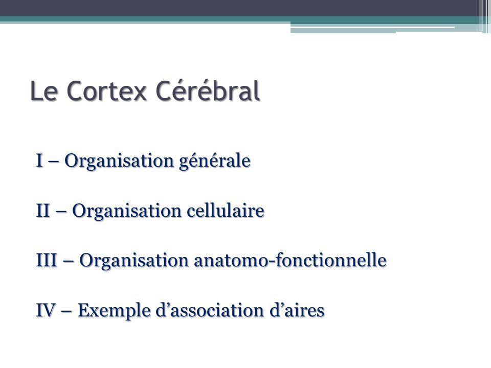 Le Cortex Cérébral I – Organisation générale