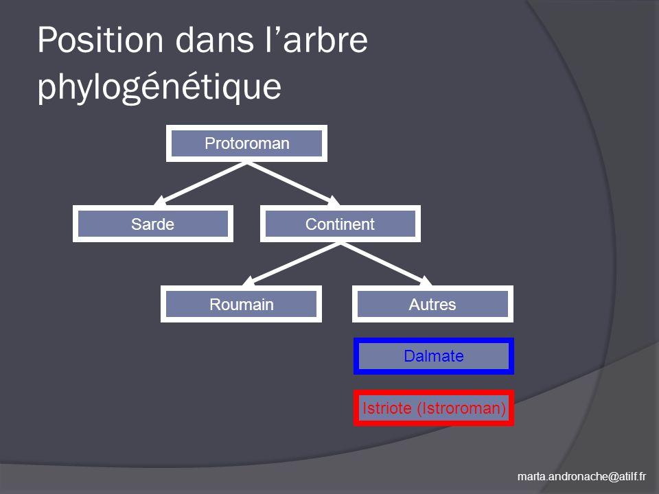 Position dans l'arbre phylogénétique