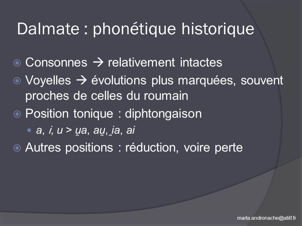 Dalmate : phonétique historique