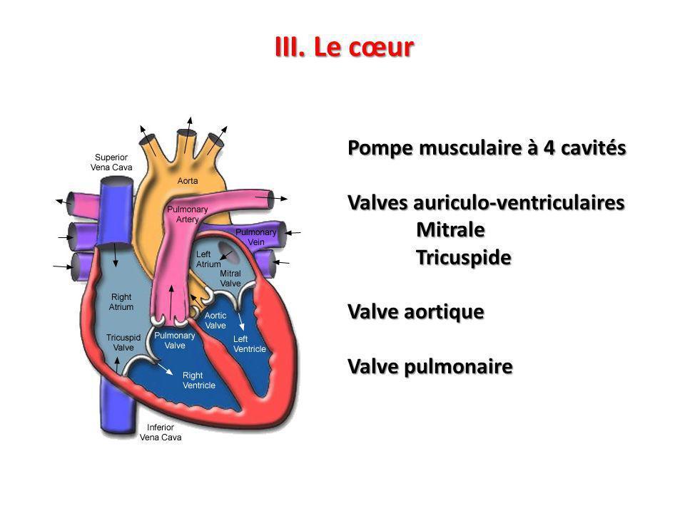 III. Le cœur Pompe musculaire à 4 cavités