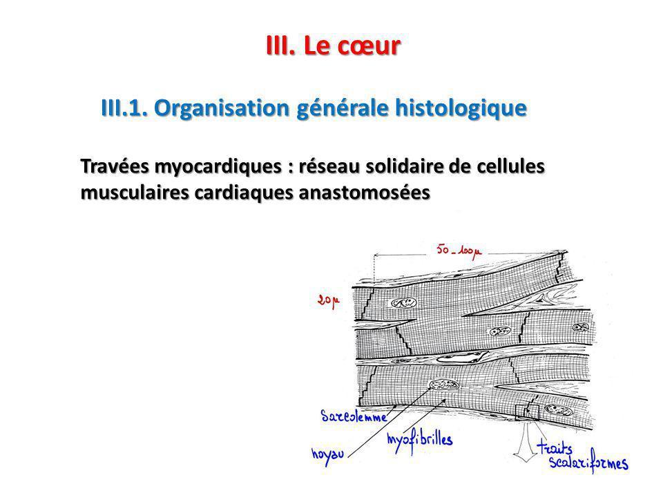 III. Le cœur III.1. Organisation générale histologique