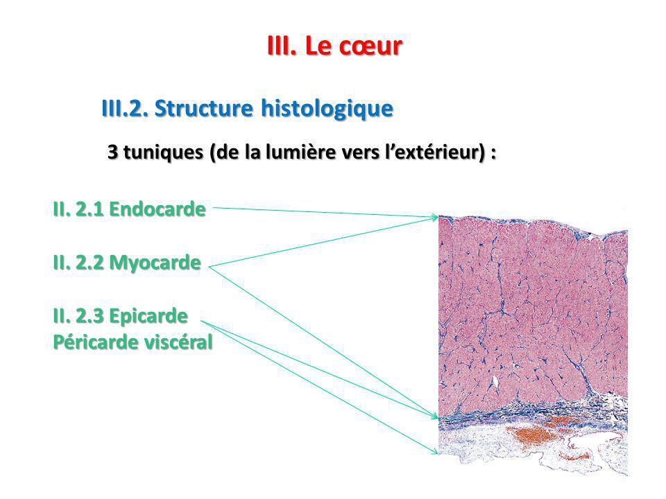 III. Le cœur III.2. Structure histologique