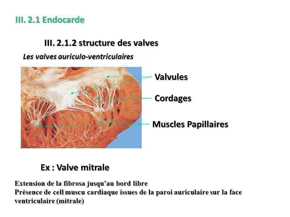 III. 2.1.2 structure des valves
