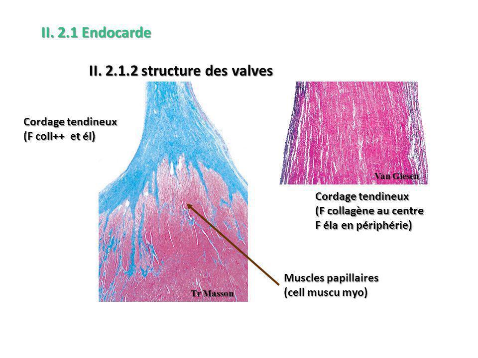 II. 2.1.2 structure des valves