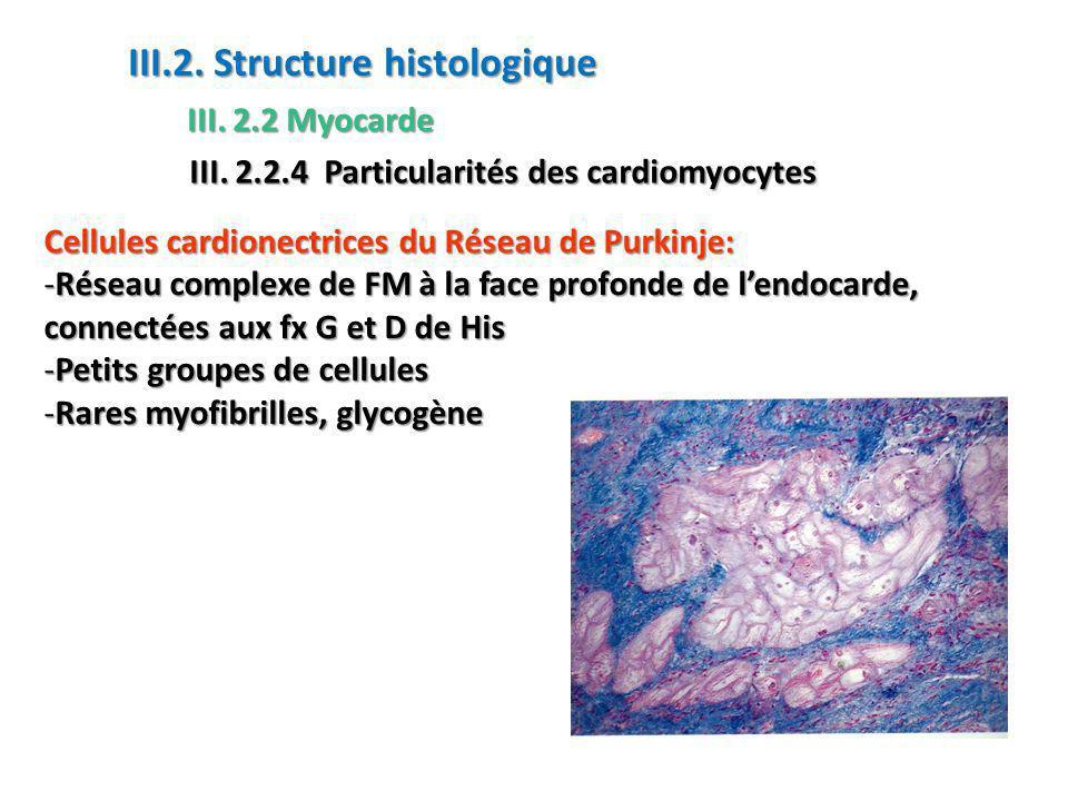 III.2. Structure histologique