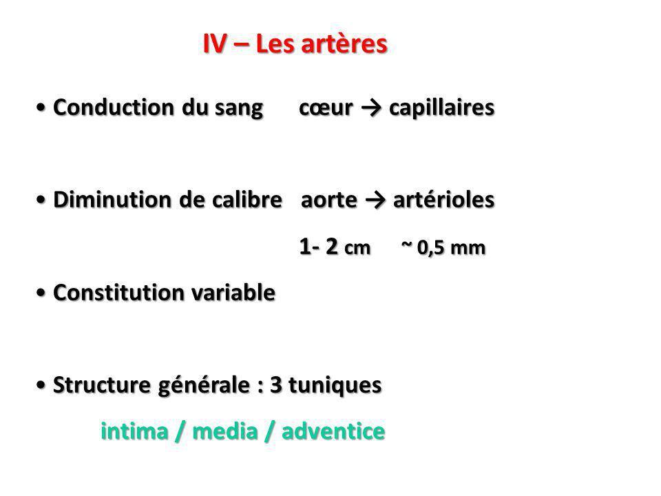 IV – Les artères Conduction du sang cœur → capillaires