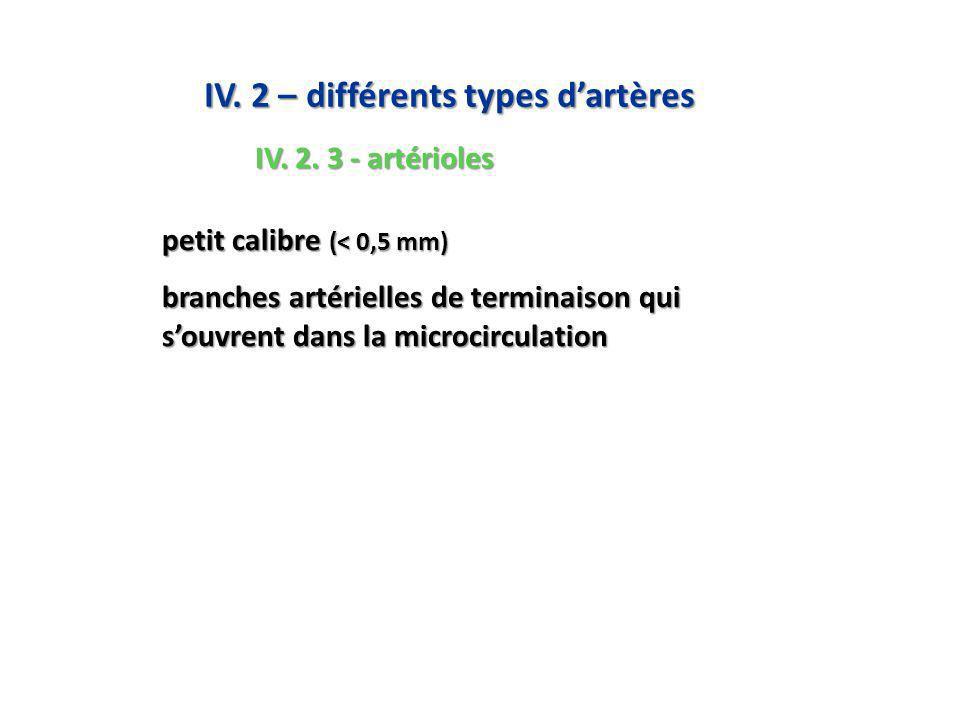 IV. 2 – différents types d'artères