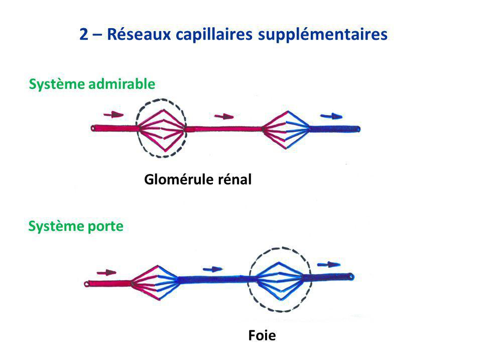 2 – Réseaux capillaires supplémentaires
